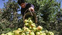 عراق، مقصد اول صادرات محصولات کشاورزی و صنایع غذایی ایران