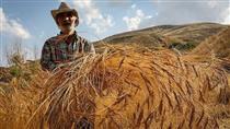 کاهش ۲۶ درصدی صادرات محصولات کشاورزی در ۹ماهه امسال