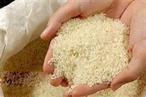 مسافران شمال برنج یکسال خود را از شهرهای تولیدکننده تهیه کنند