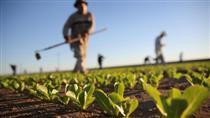 آینده کشاورزی ایران چگونه رقم می خورد؟