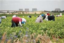 کشاورزی، پایدارترین بخش در تولید ناخالص داخلی