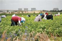 طرح های روستایی مورد حمایت بانک سینا به مرز ۲۴۰۰ رسید